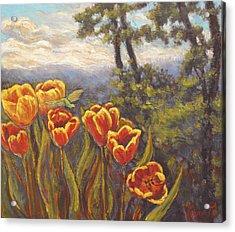 Tulip Vista Acrylic Print