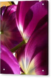 Tulip Weave Acrylic Print by Kathy Corday