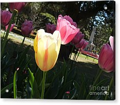 Acrylic Print featuring the photograph Tulips 2 by Therese Alcorn