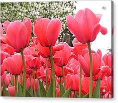 Tulips Acrylic Print by Andrea Drake