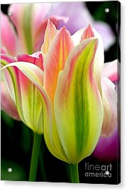 Tulips Acrylic Print by Anne Gordon