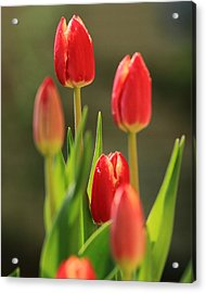 Acrylic Print featuring the photograph Tulips by Coby Cooper