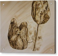 Tulips In Sepia Acrylic Print by Maureen Hargrove