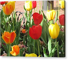 Acrylic Print featuring the photograph Tulips In The Sunshine by Shawn Hughes