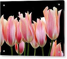 Tulips Acrylic Print by Nicola Butt