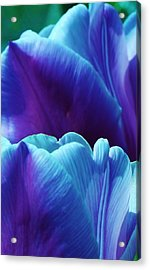 Tulips Of A Different Color Acrylic Print by Bruce Bley