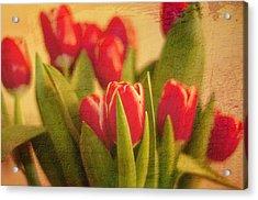 Tulips Acrylic Print by Paul Davis
