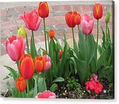 Acrylic Print featuring the photograph Tulips by Shawn Hughes