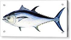 Tuna Acrylic Print by Granger