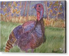 Turkey Call Acrylic Print by Belinda Lawson