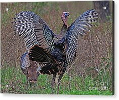 Acrylic Print featuring the photograph Turkey Revelation by Larry Nieland