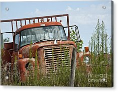 Turned Out To Pasture Acrylic Print by Wilma  Birdwell