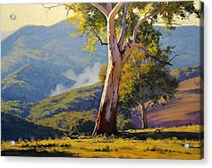 Turon Gum Tree Acrylic Print