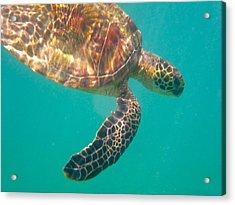 Turtle 3 Acrylic Print by Erika Swartzkopf