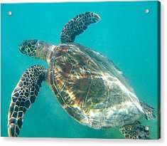 Turtle 7 Acrylic Print by Erika Swartzkopf