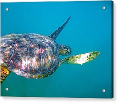 Turtle 9 Acrylic Print