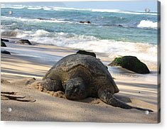 Turtle Beach Acrylic Print by Natalija Wortman
