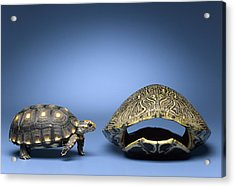 Turtle Looking At Larger, Empty Shell Acrylic Print by Jeffrey Hamilton