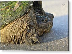 Acrylic Print featuring the photograph Turtle by Nick Mares
