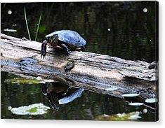 Turtle Reflected Acrylic Print