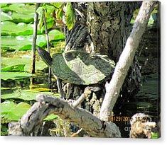 Turtle Sun Acrylic Print by Thomas Sterett