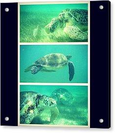 #turtles #sea #ocean #tropical Acrylic Print