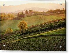 Tuscan Vinyards Acrylic Print by John and Tina Reid