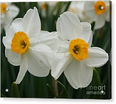 Twin Flowers Acrylic Print by Tina McKay-Brown