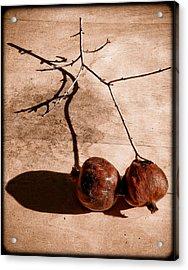 Albuquerque, New Mexico - Twin Pomegranates Acrylic Print