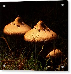 Acrylic Print featuring the photograph Twins by Karen Harrison