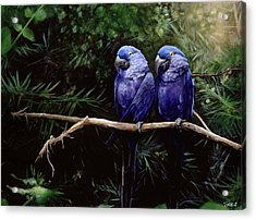 Twins Acrylic Print by Steve Goad