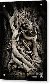 Twisted Dreams Acrylic Print by Mary Machare