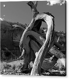 Twisted Root Acrylic Print by Dale Davis