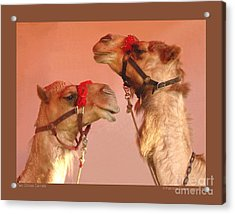 Two Circus Camels Acrylic Print by Patricia Overmoyer