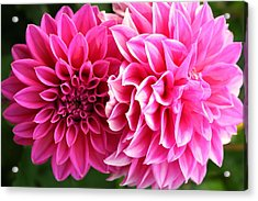 Acrylic Print featuring the photograph Two Dahlias In Shades Of Pink by Laurel Talabere