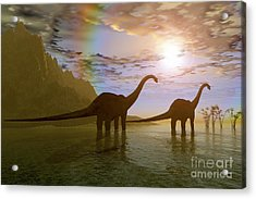 Two Diplodocus Dinosaurs Wade Acrylic Print by Corey Ford