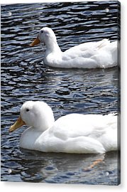 Two Ducks Acrylic Print by Pamela Stanford