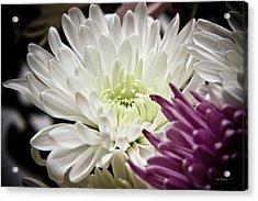 Two Flowers Acrylic Print by John Pagliuca