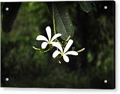 Two Flowers Acrylic Print by Sumit Mehndiratta