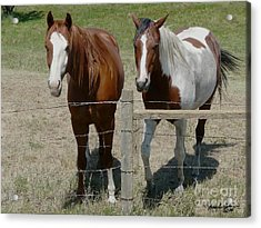 Two Friends Acrylic Print by Bobbylee Farrier