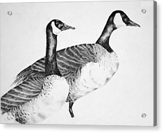 Two Geese Acrylic Print by Mick Gwin