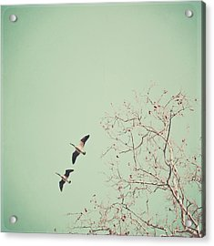 Two Geese Migrating Acrylic Print by Laura Ruth
