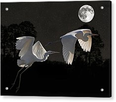 Two Great Egrets  Acrylic Print by Eric Kempson