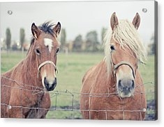 Two Horses Behind A Wired Fence Acrylic Print by Cindy Prins