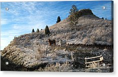 Two Horses Acrylic Print by Ric Soulen