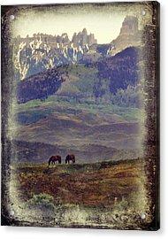Two Horses Acrylic Print