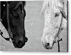 Two Horses Acrylic Print by Sayantan Mitra