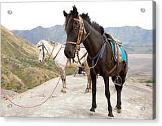 Acrylic Print featuring the photograph Two Horses by Yew Kwang
