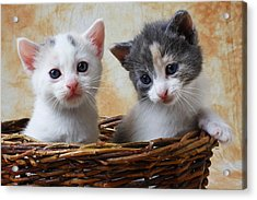 Two Kittens In Basket Acrylic Print by Garry Gay