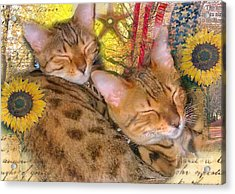 Two Kitties Sitting In A Tree Acrylic Print